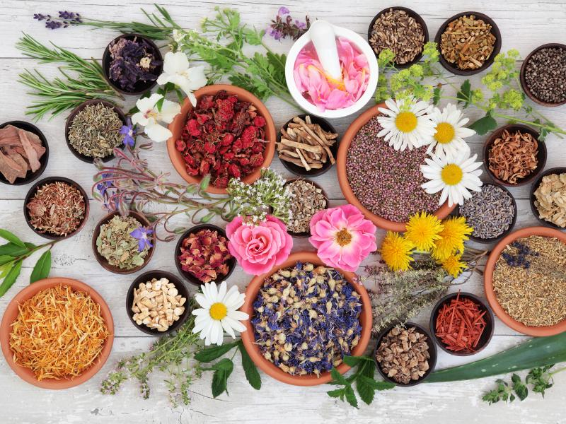 plantes pour santé et bien-être hépatique